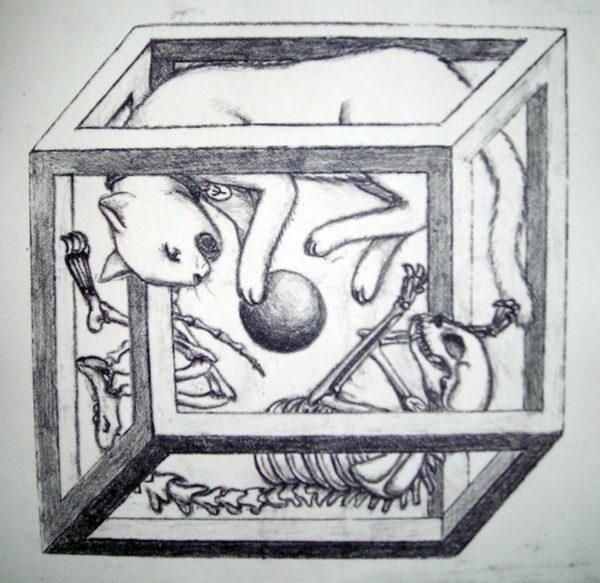 Schrodinger's Cat Illusion