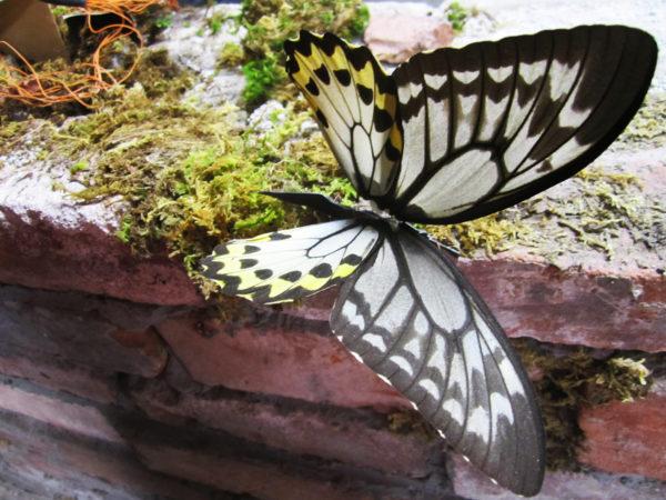 Butterflies >< Sleep No More